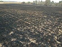טרור העפיפונים: אש בעוטף עזה